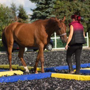 Kristin Richter bei der Calm Horse Academy