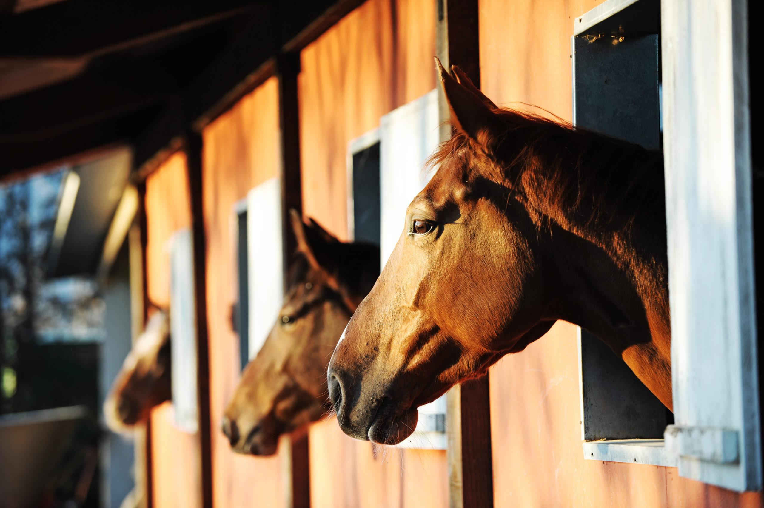Stallhaltung Pferd