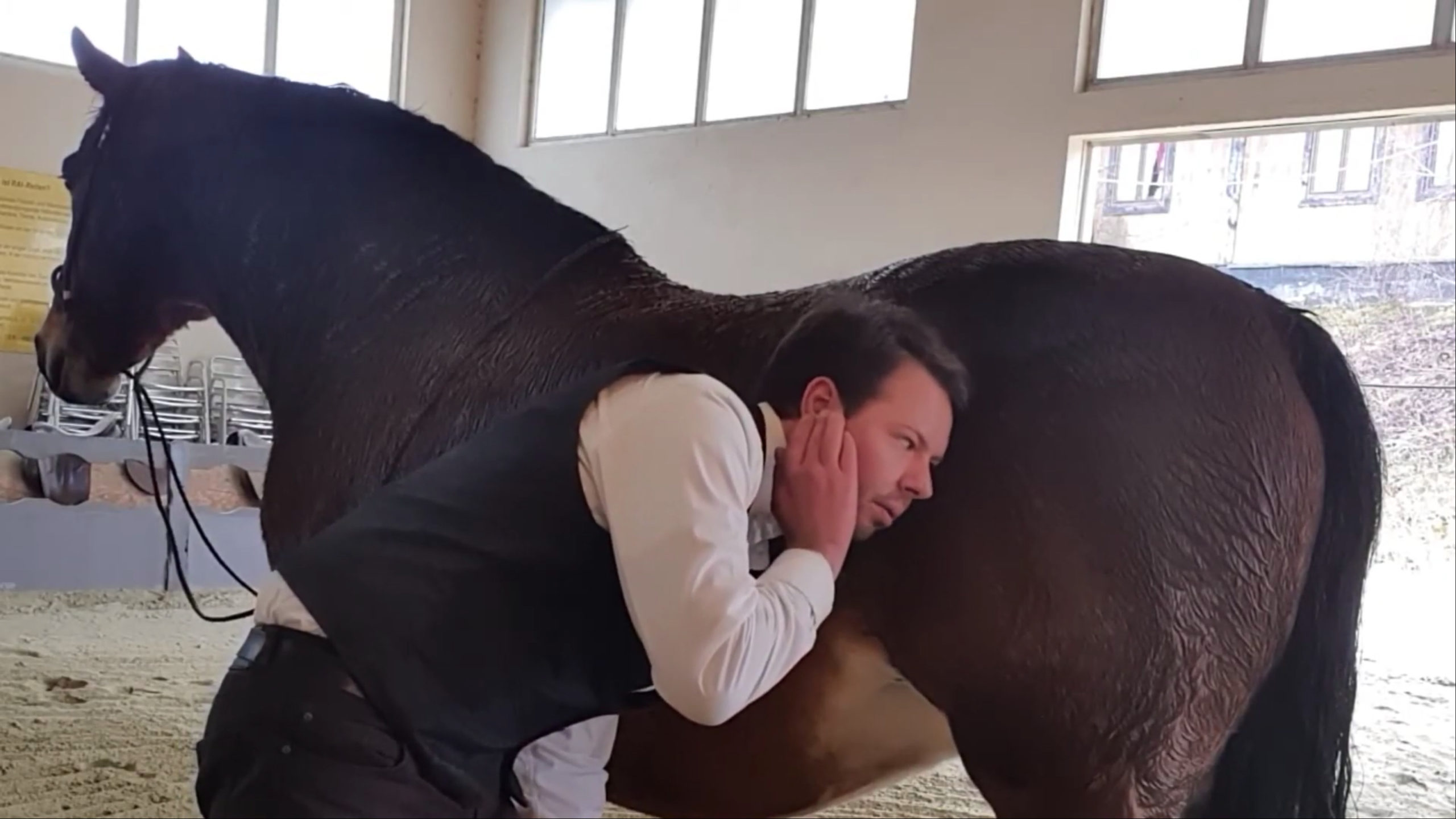 Darmgeräusche Pferd