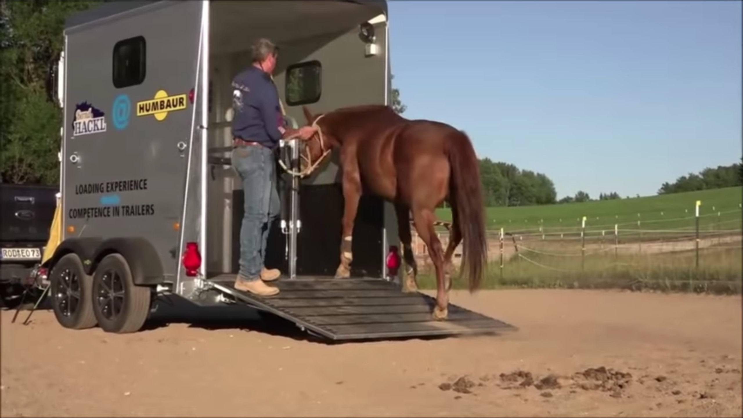Pferd verladen