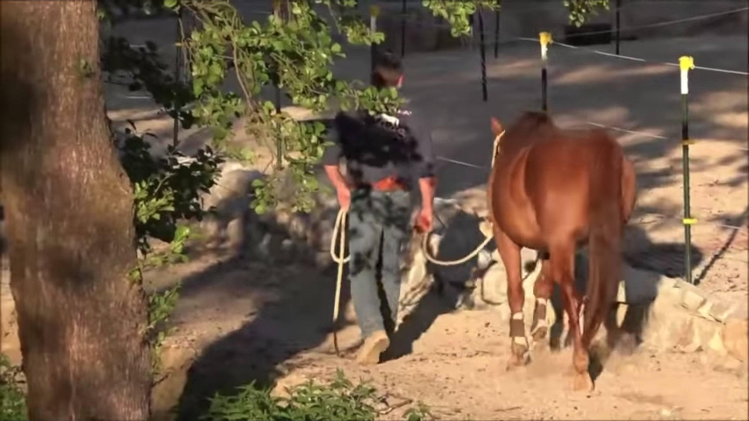 Das Pferd führen lernen