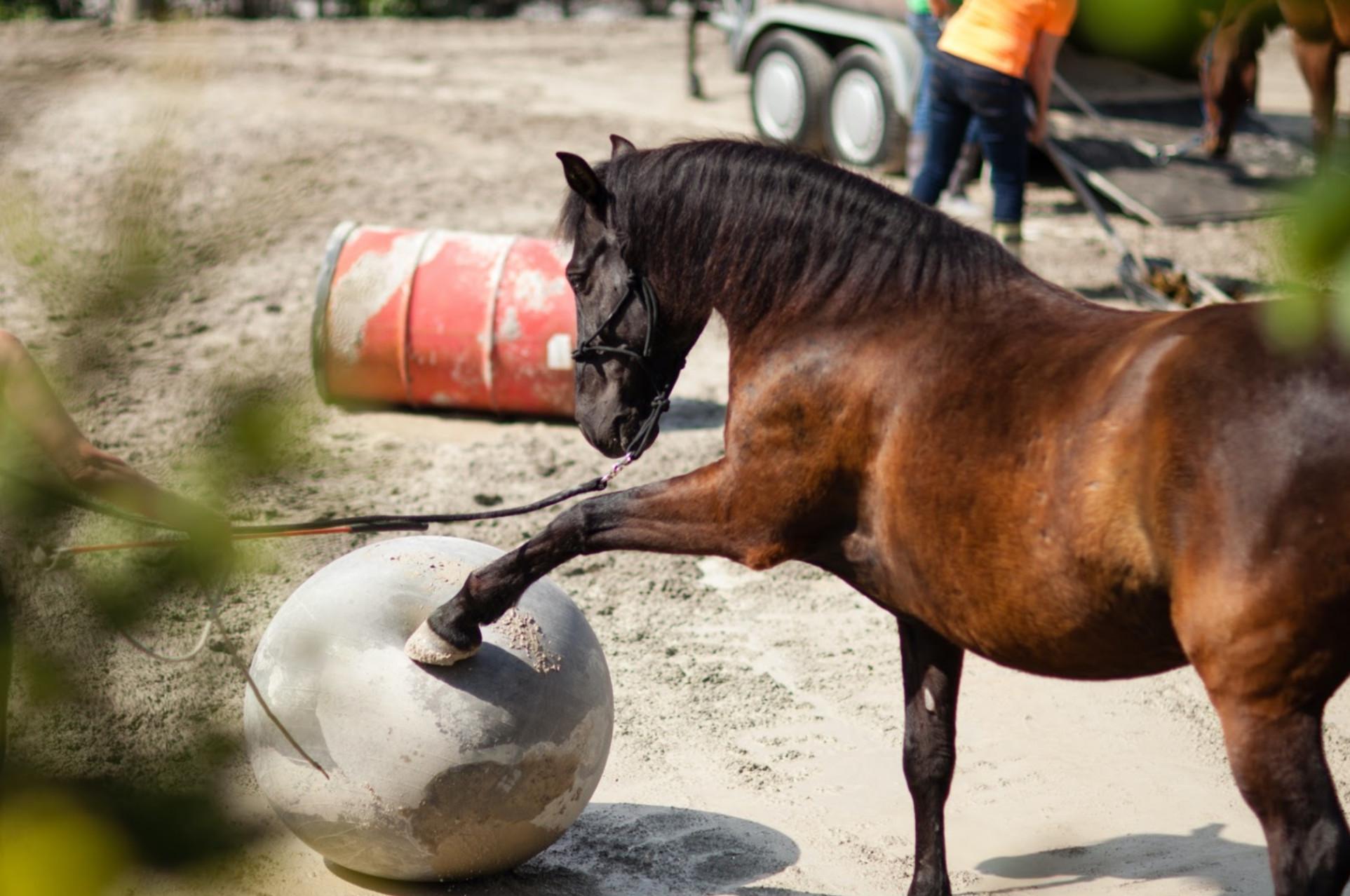 Schlechte Erfahrungen mit Pferden