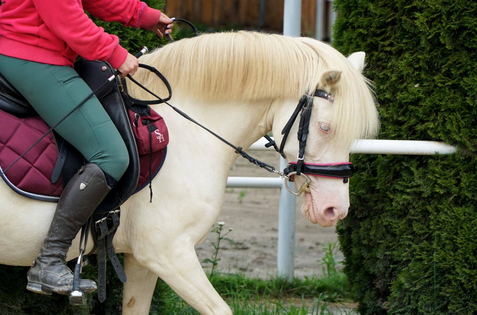 Calm Horse Academy